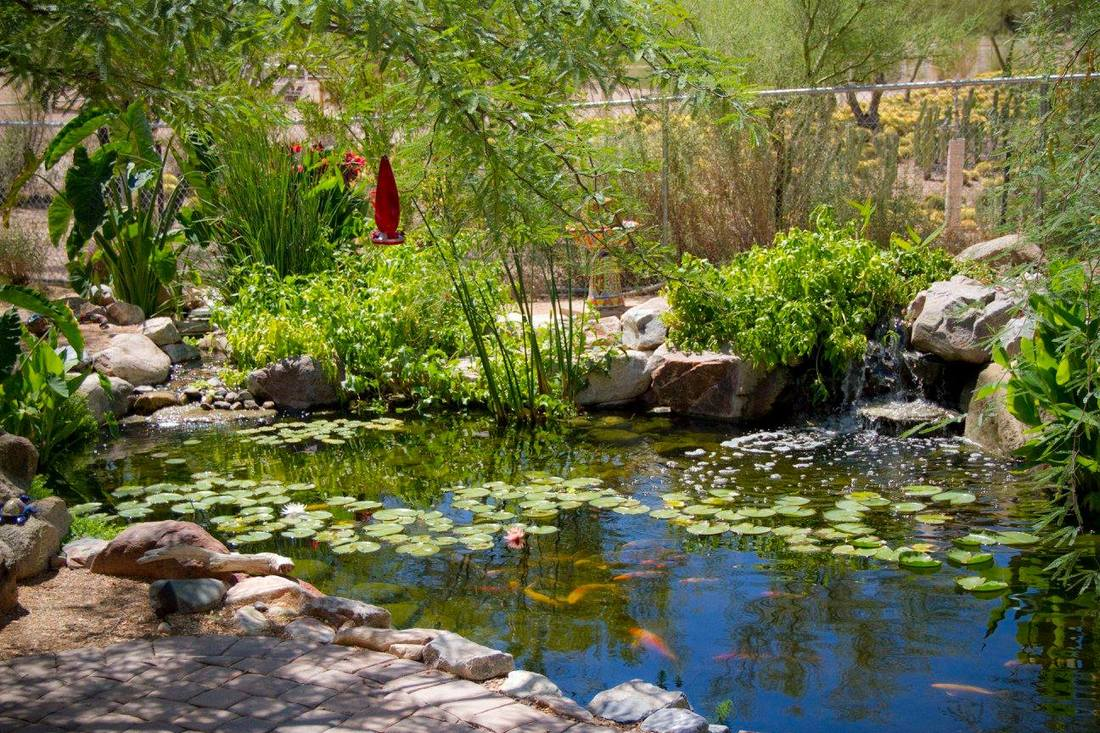 Pond installation maintenance phoenix scottsdale az pond for Fish pond installation