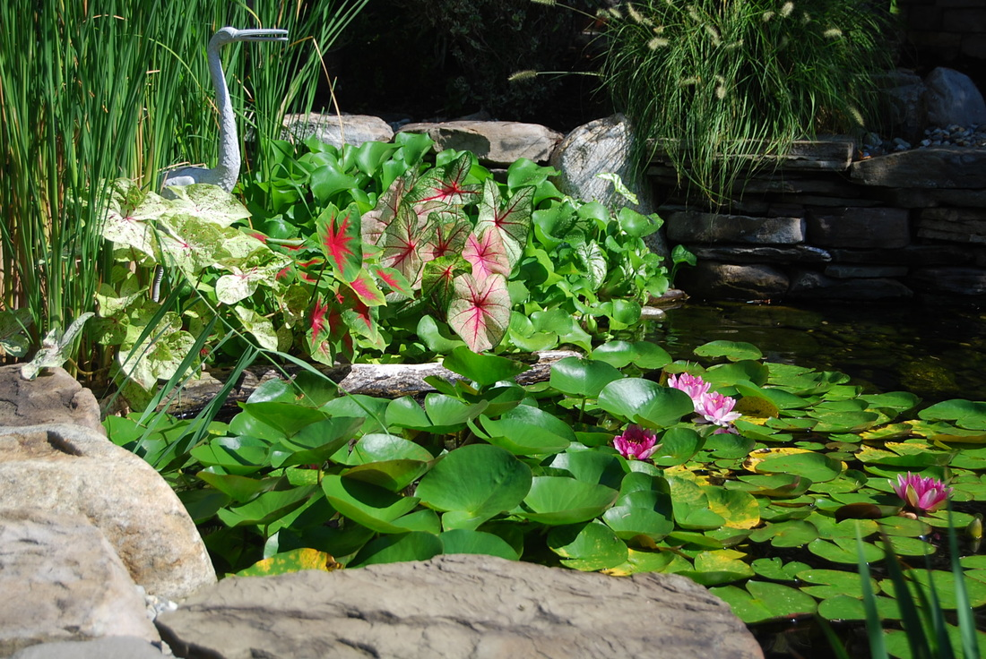ecosystems pond contractor palisades park nj bergen county pond
