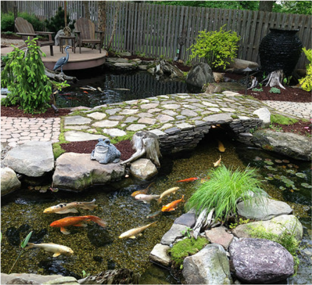 Fish Pond Water Garden Installation By Professional Pond