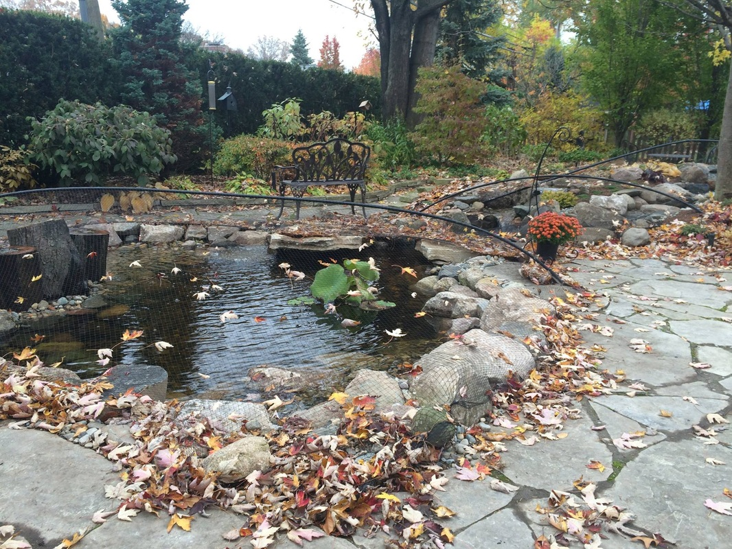 Pond contractor builder maintenance services macomb for Pond service